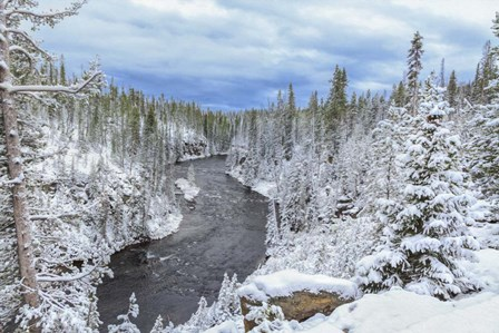 Yellowstone Winter In Fall by Galloimages Online art print