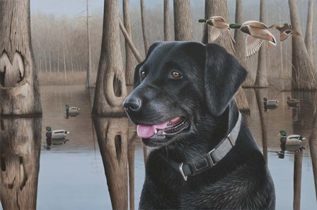 Black Lab by Clarence Stewart art print