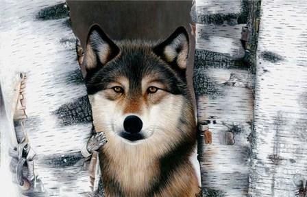 Wolf Peeking Through The Birch by Clarence Stewart art print