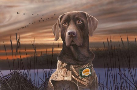 Chocolate Lab In The Sunset by Clarence Stewart art print