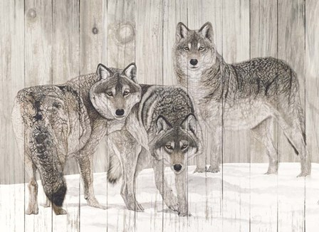 Three Grey Wolves on Wood by Jacquie Vaux art print