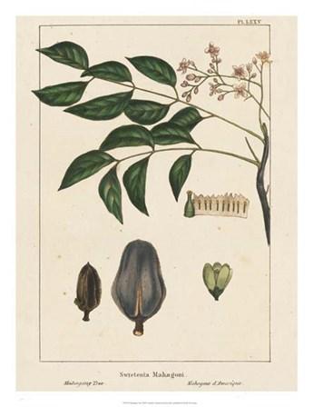 Mahogany Tree by John Silva art print