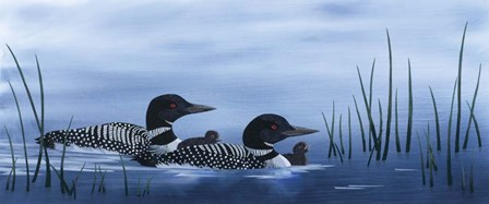 Family of Loons by Kestrel Michaud art print