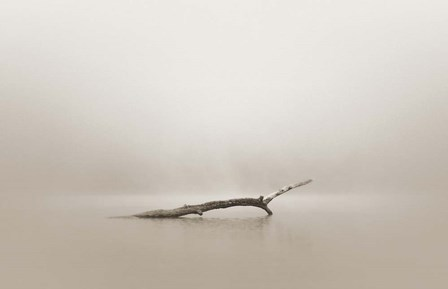 Still by Nicholas Bell Photography art print