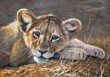 Young Lion Resting by Pip McGarry art print