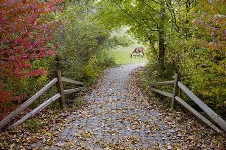 Deer in the Woods, Farmington Hills, Michigan 08 by Monte Nagler art print