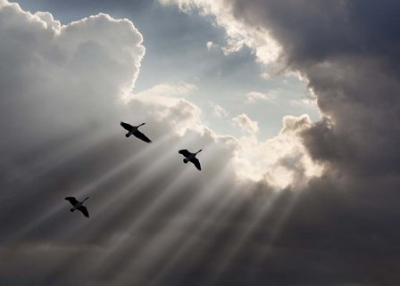 Flying on Sunbeams, Macinaw Island, Michigan 10 by Monte Nagler art print