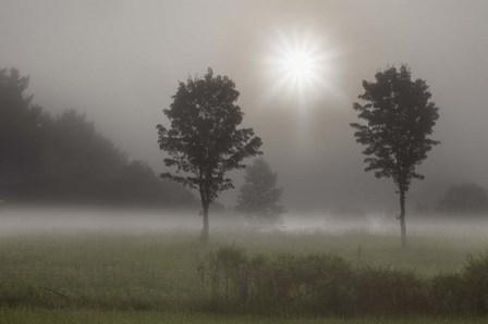 Two Trees & Sunburst, Logan, Ohio 10 by Monte Nagler art print