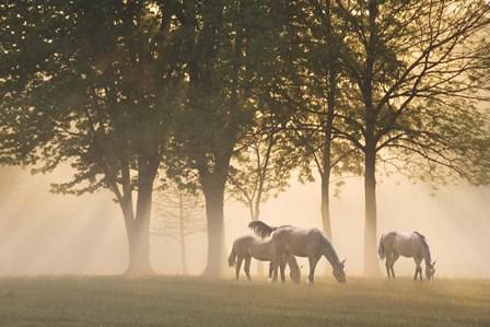 Horses in the mist by Monte Nagler art print