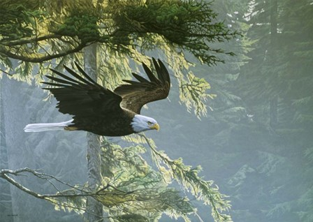 Forest Flight / Eagle by Ron Parker art print