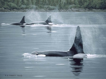 Orcas by Ron Parker art print