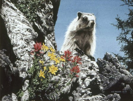 Young Marmot by Ron Parker art print