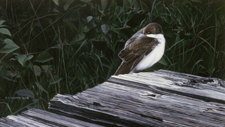 Tree Swallow by Ron Parker art print