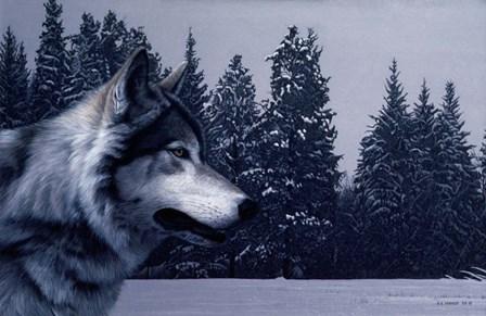 Gray Wolf Portrait by Ron Parker art print