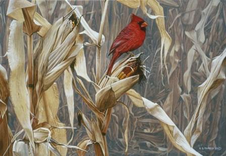 Autumn Cornfield - Cardinal by Ron Parker art print