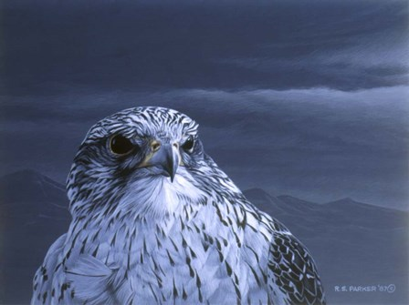 Gyr Falcon Portrait by Ron Parker art print