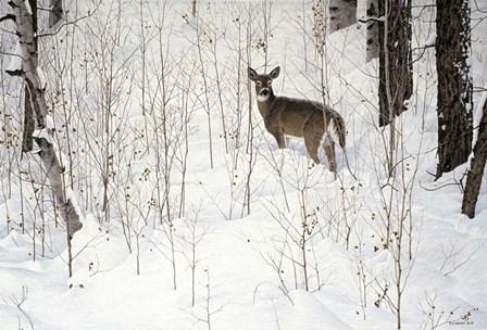 Deep Snow- Whitetail by Ron Parker art print