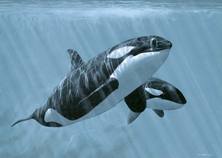 Mother And Son- Orcas by Ron Parker art print