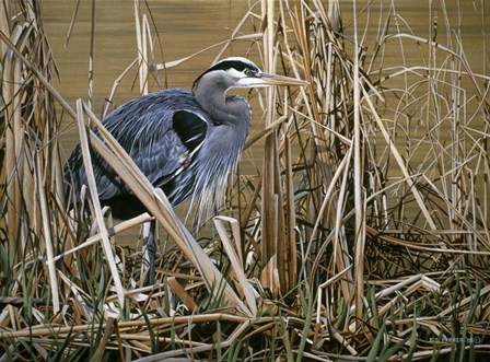 Early Spring - Great Blue Heron by Ron Parker art print