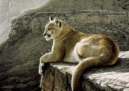 Rimrock - Cougar by Ron Parker art print