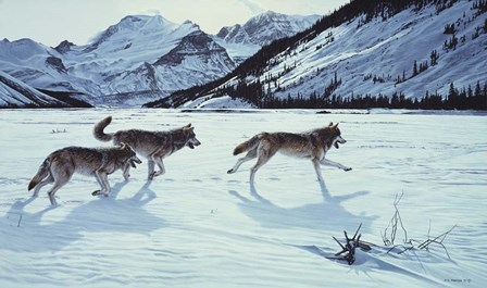 On The Run - Wolf Pack by Ron Parker art print