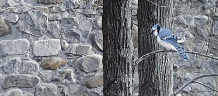 Autumn Blue Jay by Ron Parker art print