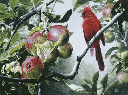 Cardinal And Apples by Ron Parker art print