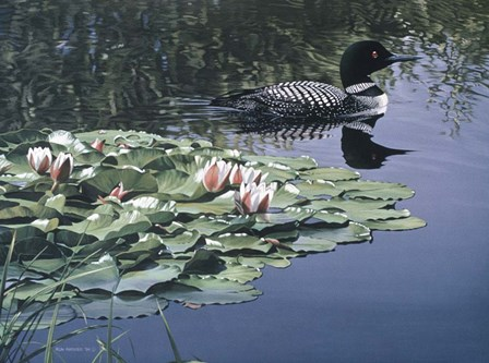 Loon And Lilies by Ron Parker art print