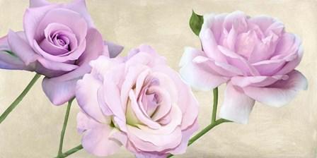 Rose Classiche by Serena Biffi art print