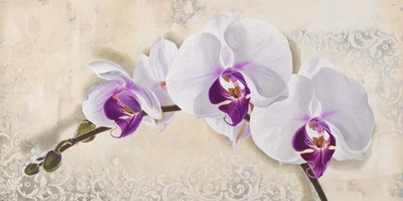 Royal Orchid by Elena Dolci art print