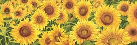 Field of Sunflowers by Luca Villa art print