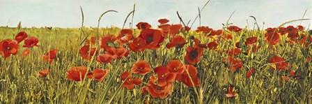 Poppy Field by Luca Villa art print