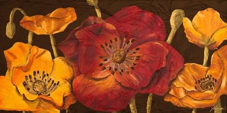 Dazzling Poppies I (black background) by Josefina art print