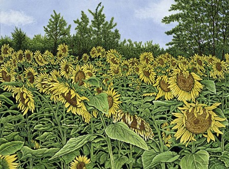 Sunflowers by Thelma Winter art print