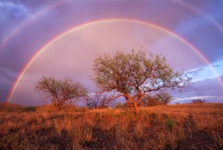 Arizona Rainbow by Thomas Haney art print