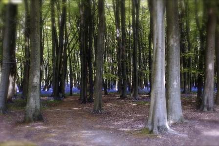 Bluebell Wood by Toula Mavridou-Messer art print