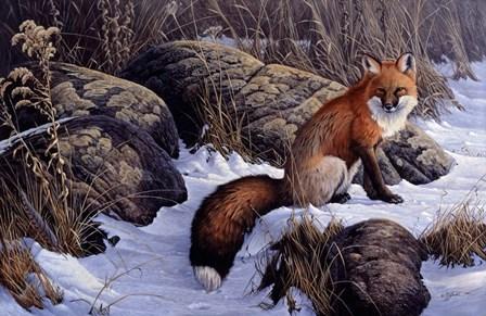 Mid Winter Pause - Red Fox by Wilhelm J. Goebel art print