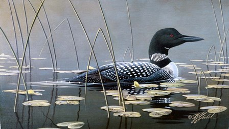Loon In Reeds by Wilhelm J. Goebel art print
