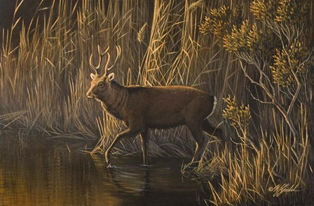 Evening Rounds Sika Deer by Wilhelm J. Goebel art print