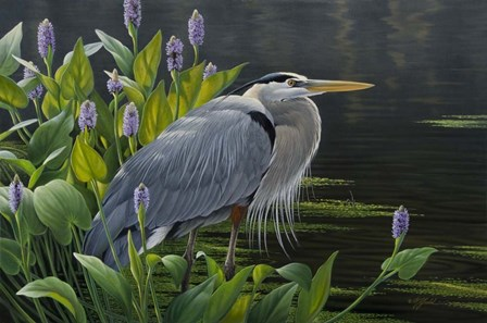 Biding Time Great Blue Heron by Wilhelm J. Goebel art print