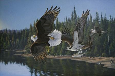 Eagle Osprey by Wilhelm J. Goebel art print