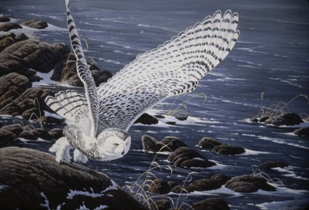 Winter Shore - Snowy Owl by Wilhelm J. Goebel art print