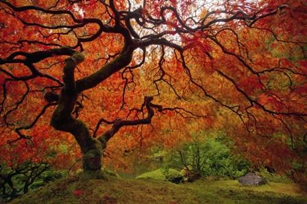 Tree Fire by Darren White Photography art print