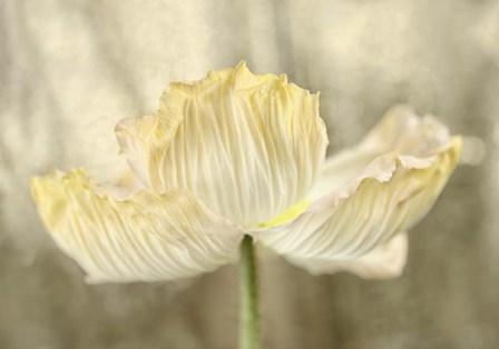 Sunshine Poppy by Cora Niele art print
