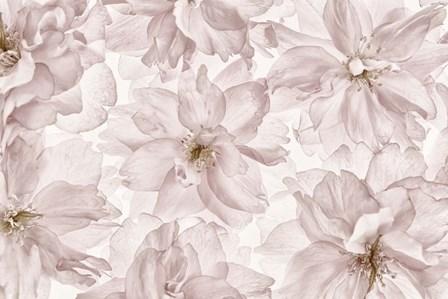 Translucent Cherry Blossom by Cora Niele art print
