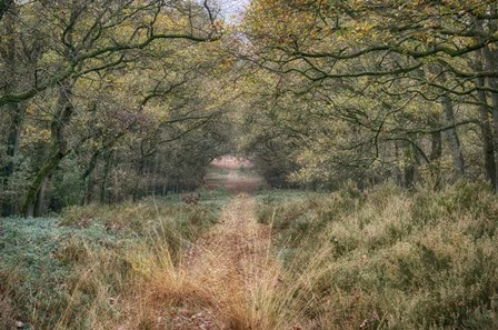 Autumn Walk by Cora Niele art print