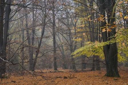 Hazy Wood by Cora Niele art print