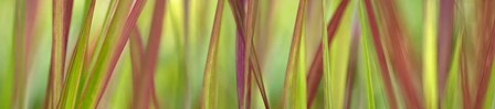 Green & Red Grass Scape by Cora Niele art print