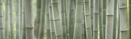 Grey Bamboo Scape by Cora Niele art print