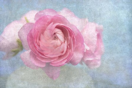 Pink Persian Buttercup Still Life by Cora Niele art print
